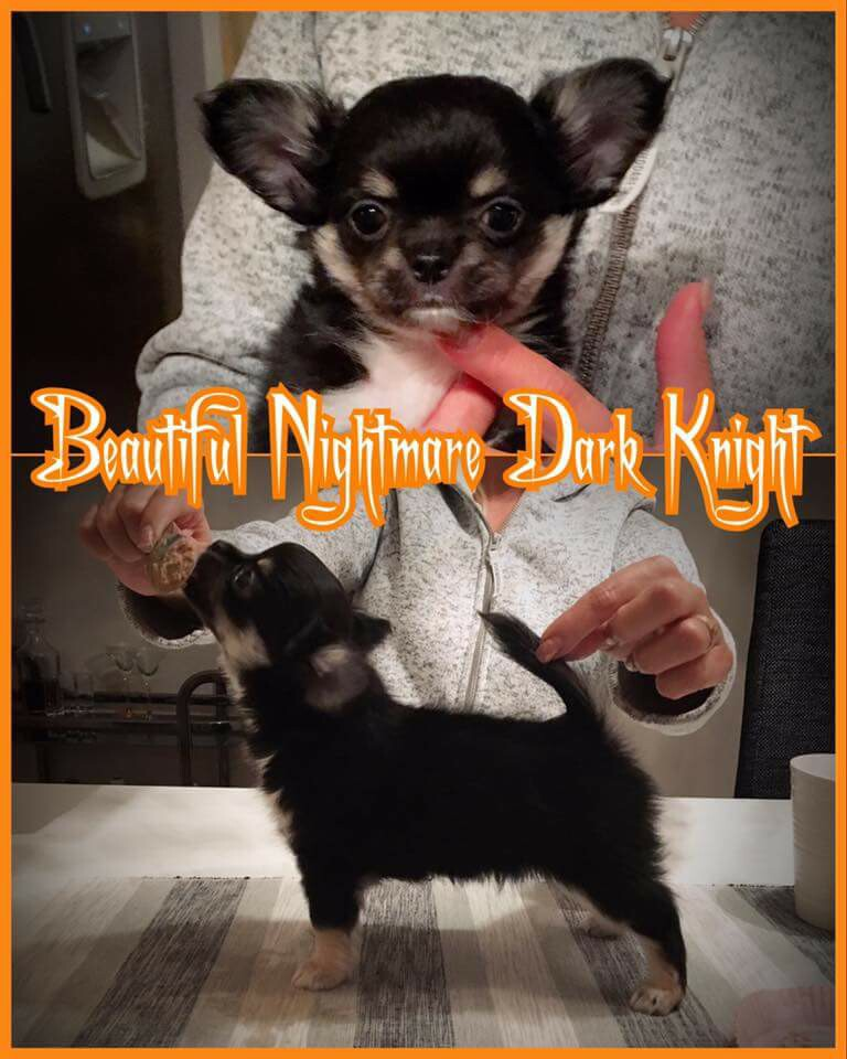 "Beautiful nightmares dark knight  ""Svante"""
