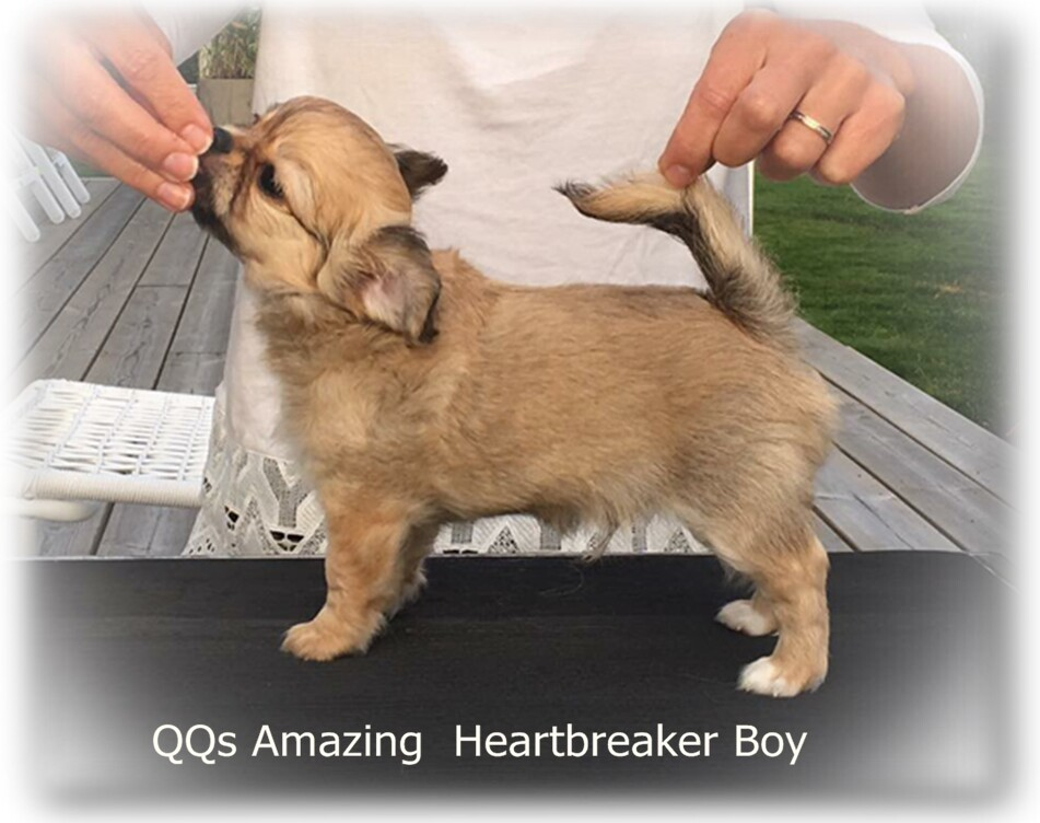 QQs Amazing  Heartbreaker Boy