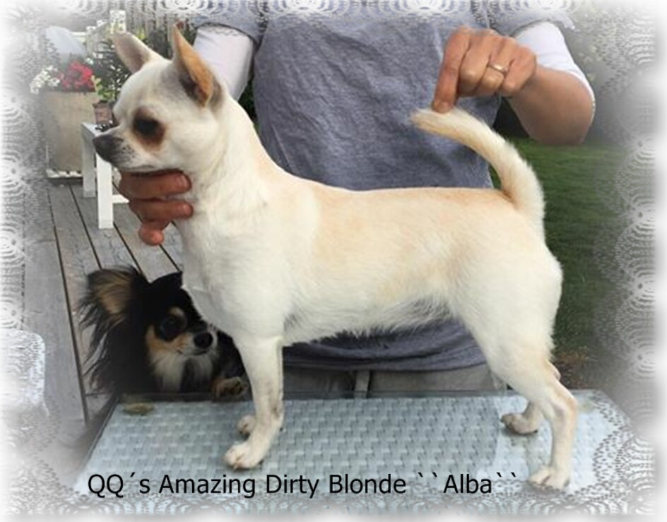 QQ´s Amazing Dirty Blonde ``Alba``